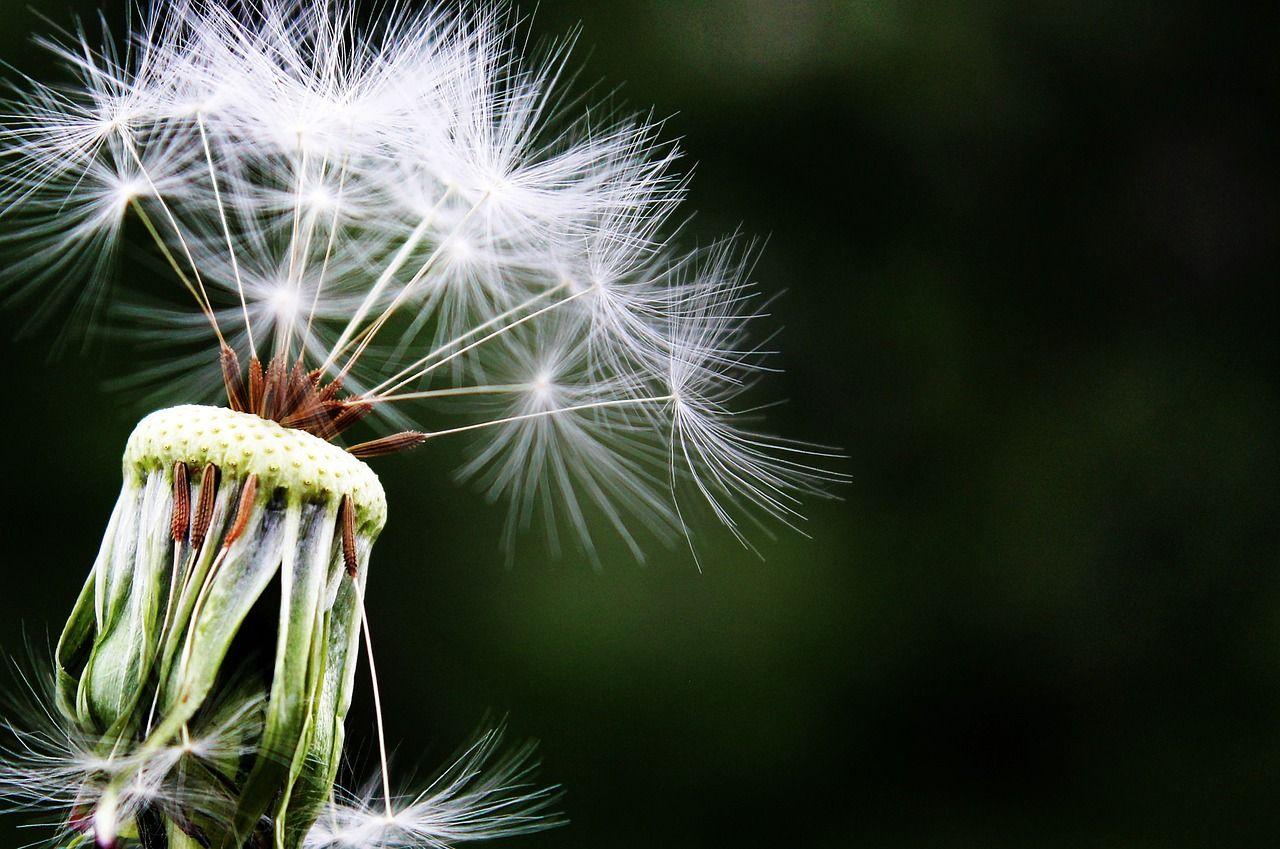 Jak rozpoznać katar alergiczny
