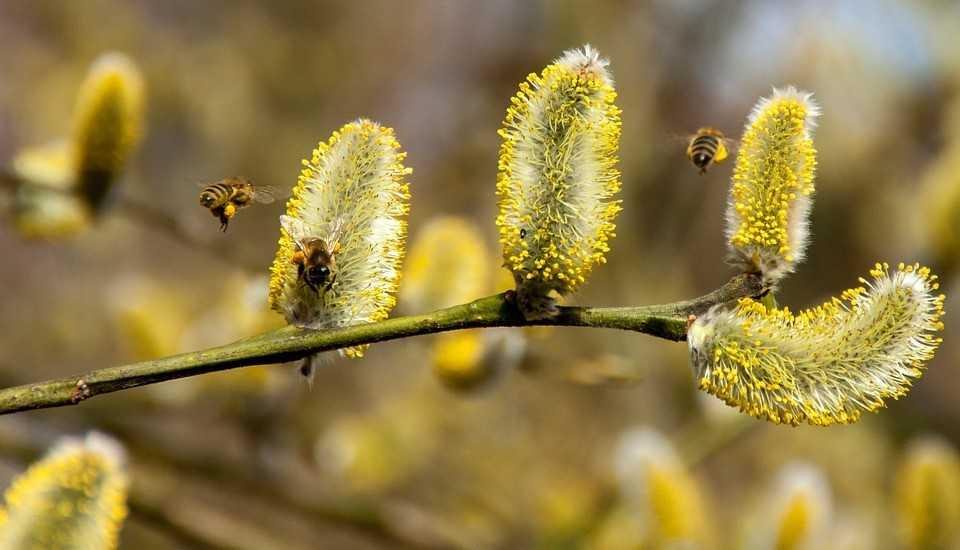 Nawracający katar a alergia